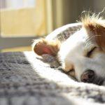 Jak zadbać o psie zdrowie?