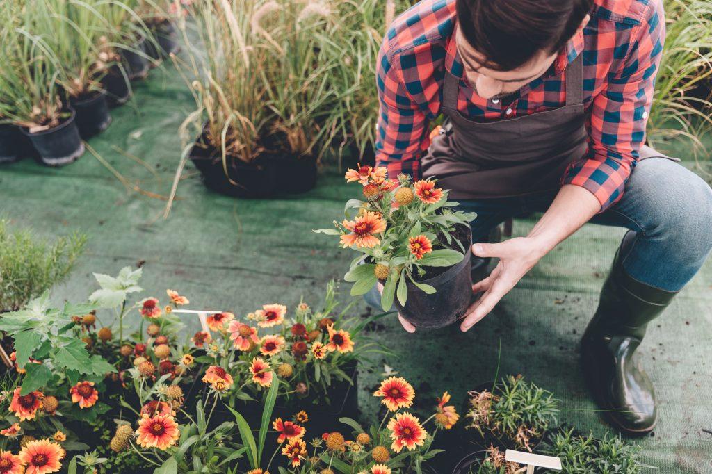 rośliny do Twojego ogrodu
