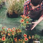 Tanie i piękne rośliny do Twojego ogrodu w Internecie